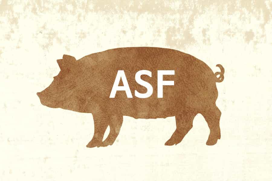 Płotem w ASF